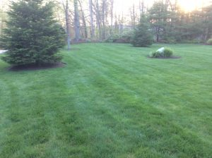 Connecticut Lawn Care