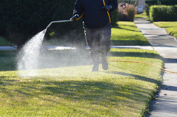 salem lawn care and Irrigation services timely tips - april - tick control