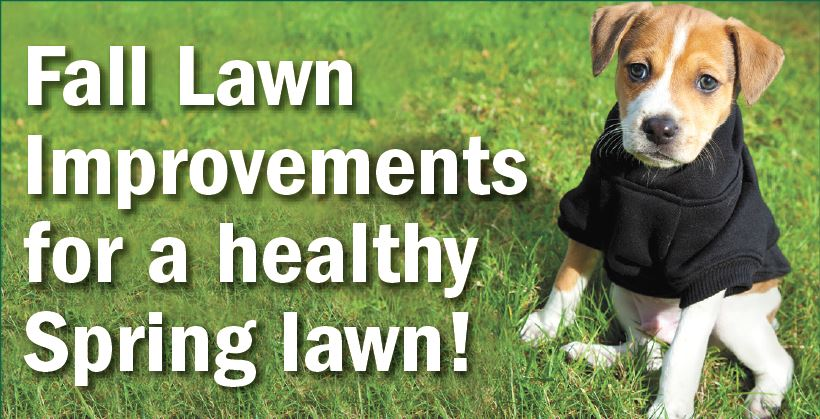 Safe Lawns of Salem - Fall Lawncare Tips