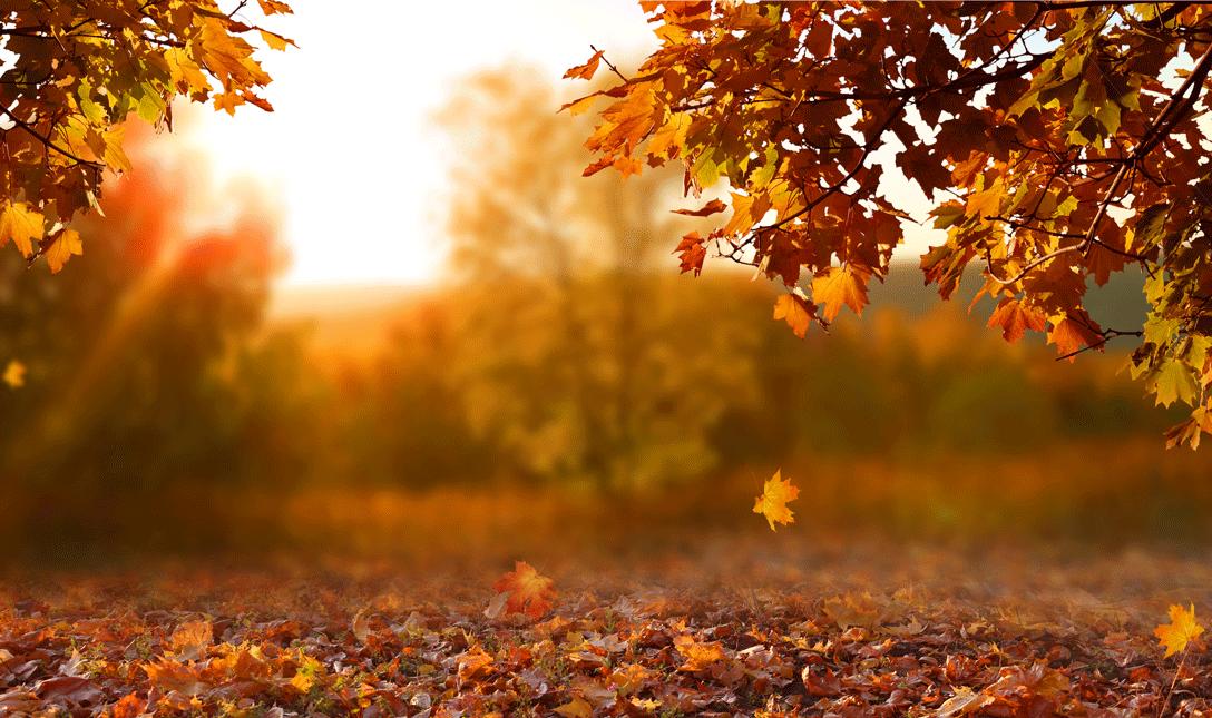 Autumn Leaves - Timely Tips - September & October